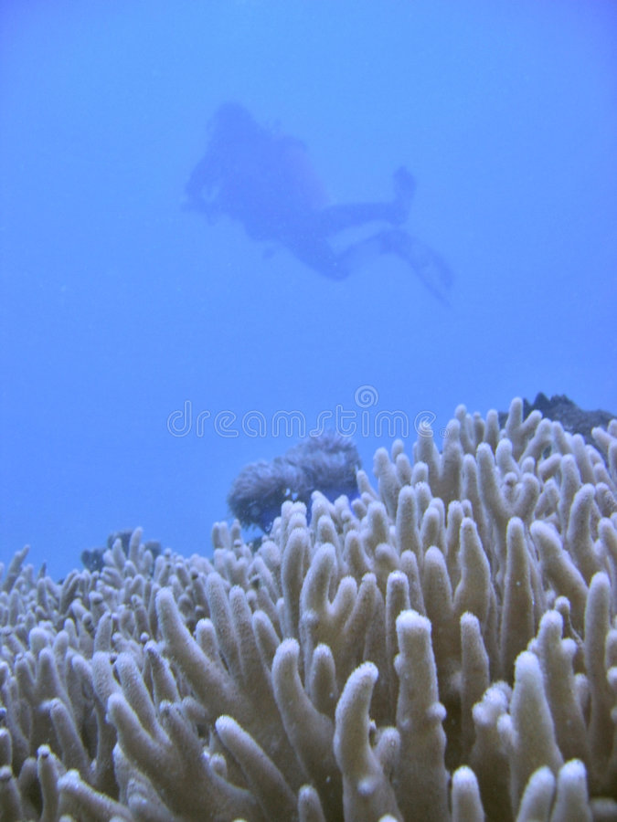 Ombra dell'operatore subacqueo di scuba fotografia stock
