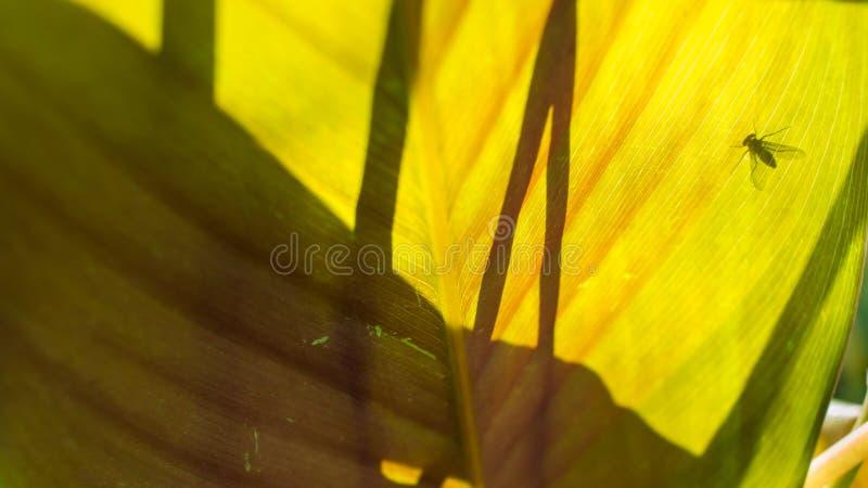 Ombra della mosca fotografie stock