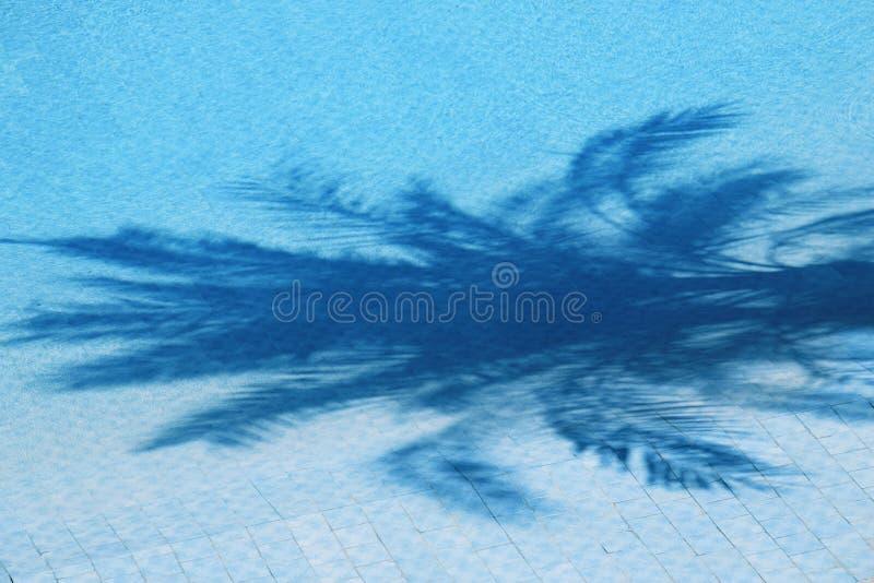 Ombra della palma fotografia stock