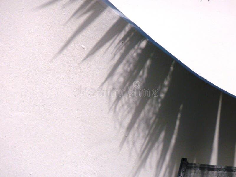Ombra della palma sulla parete bianca fotografie stock