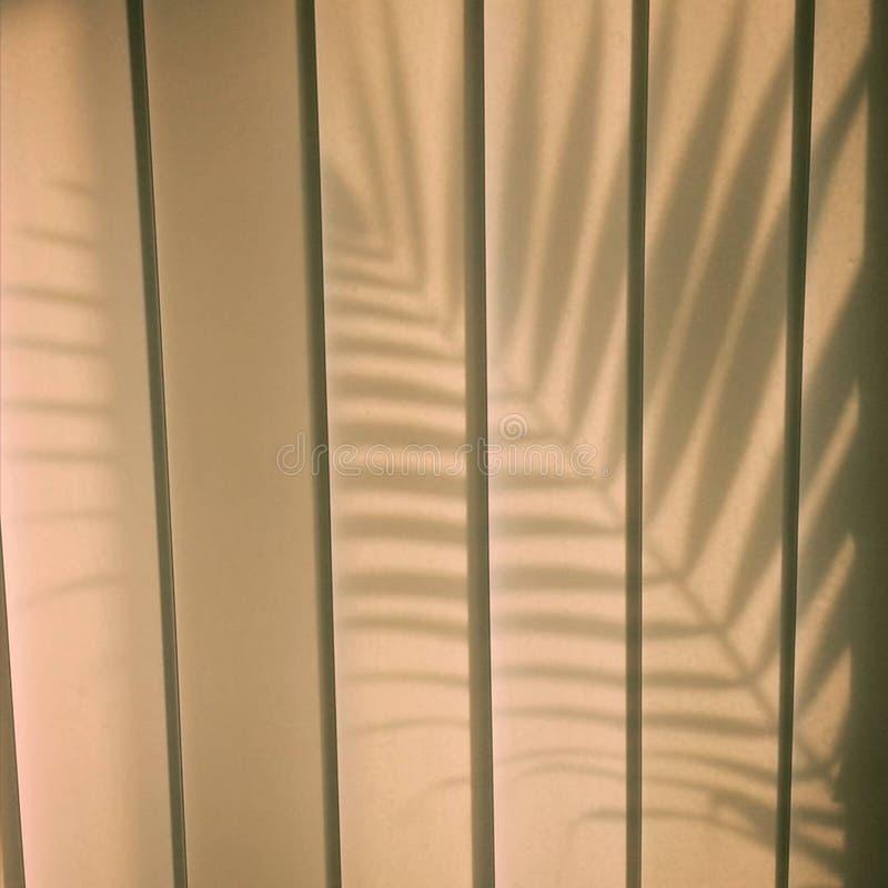 Ombra di foglia di palma royalty illustrazione gratis