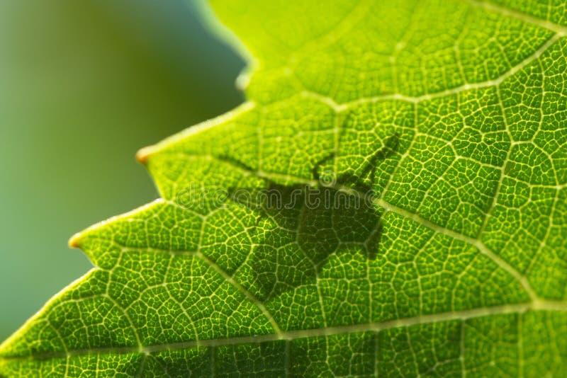 Ombra di una mosca fotografia stock libera da diritti
