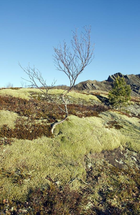 Download Ombra e cielo ed alberi fotografia stock. Immagine di foresta - 30828054