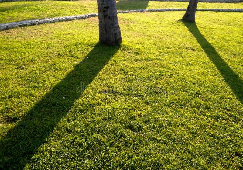 Ombra sull'iarda verde immagini stock