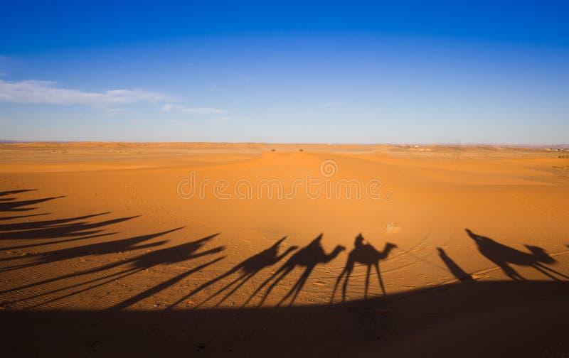 Ombrage la caravane de chameau sur le sable de désert photo stock