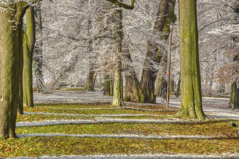 ombre bianche sull'erba fotografie stock