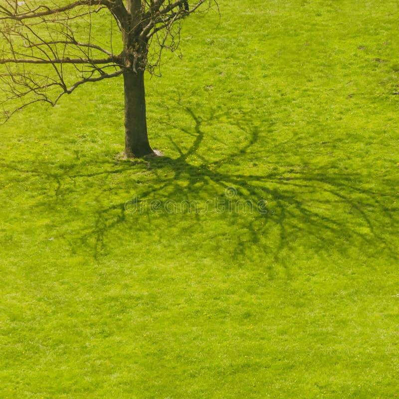 Ombre d'arbre à l'herbe image libre de droits