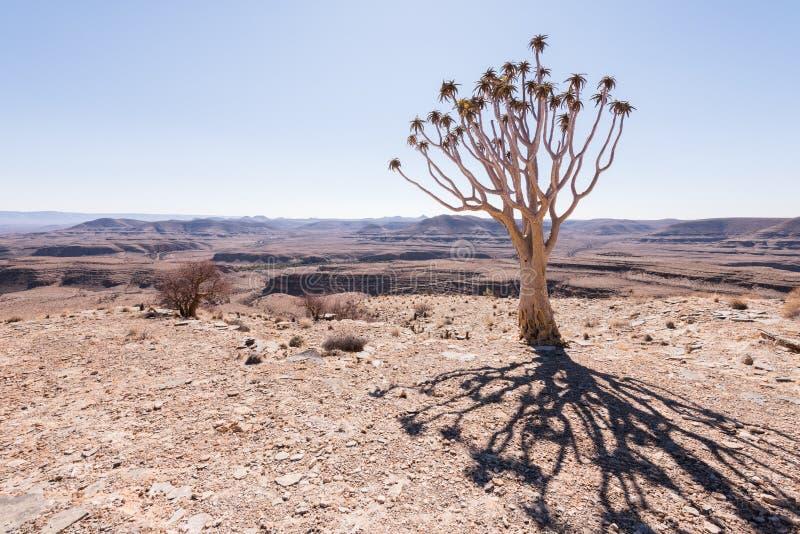 Ombre d'arbre de tremblement photographie stock