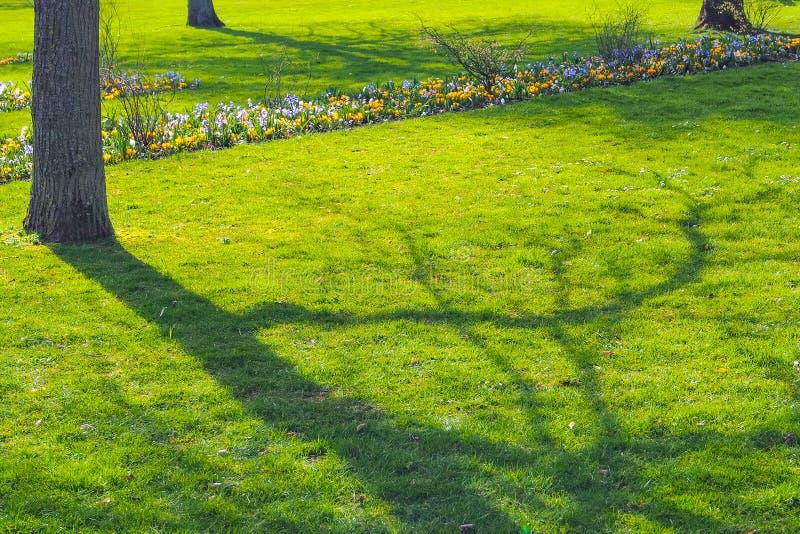 Ombre d'arbre sur l'herbe verte image stock