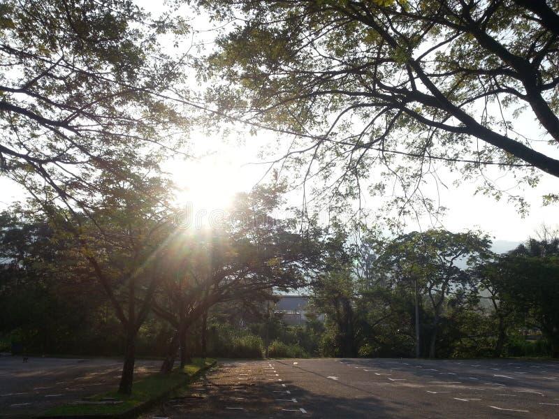 Ombre d'arbres de l'espace ouvert de The Sun image stock