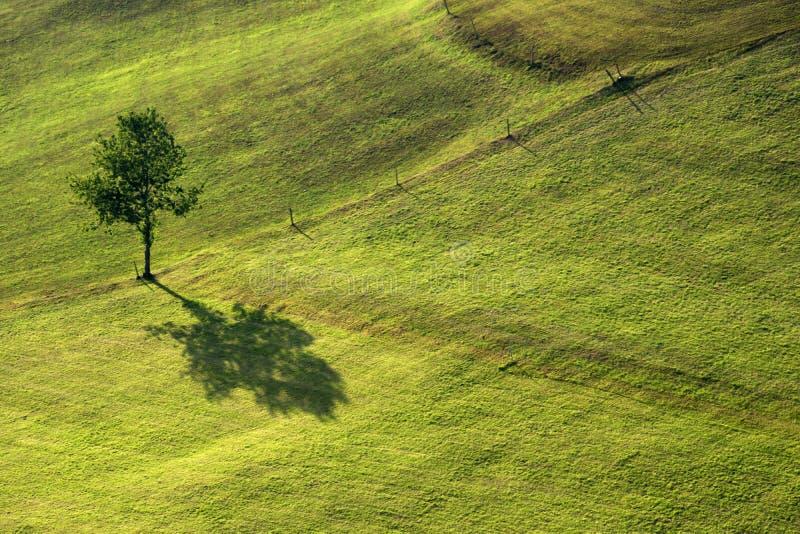 Ombre d'un arbre photographie stock libre de droits