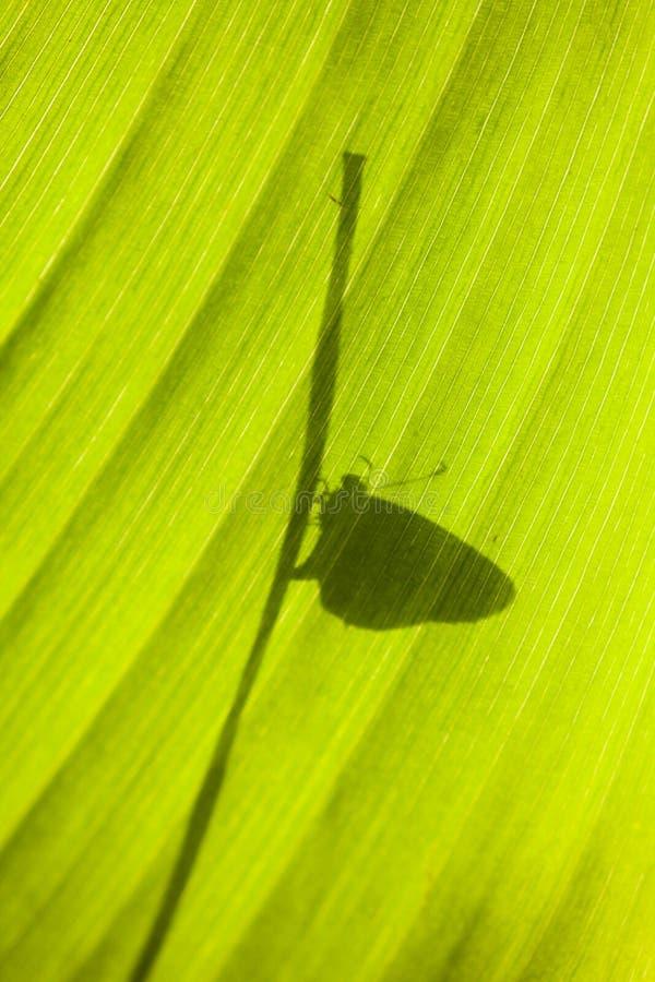 Ombre d'un papillon sur une feuille photos stock