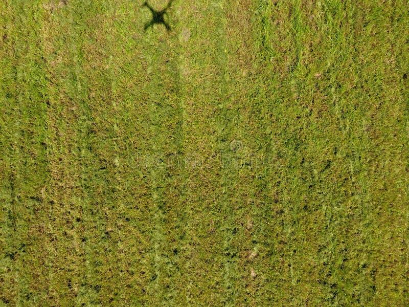 Ombre de bourdon sur l'herbe images stock