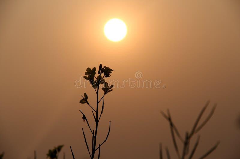 Ombre de fleur au temps de coucher du soleil image stock