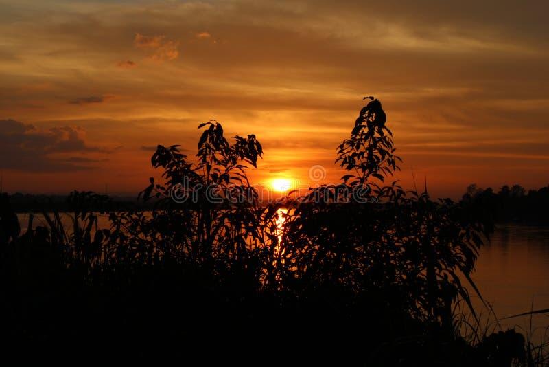 Ombre de l'arbre au coucher du soleil le soir photographie stock libre de droits