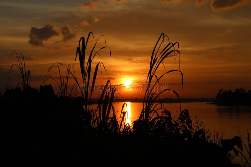Ombre de l'arbre au coucher du soleil le soir image libre de droits