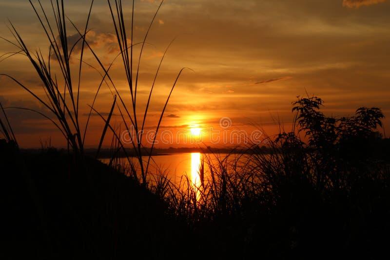 Ombre de l'arbre au coucher du soleil le soir photo libre de droits