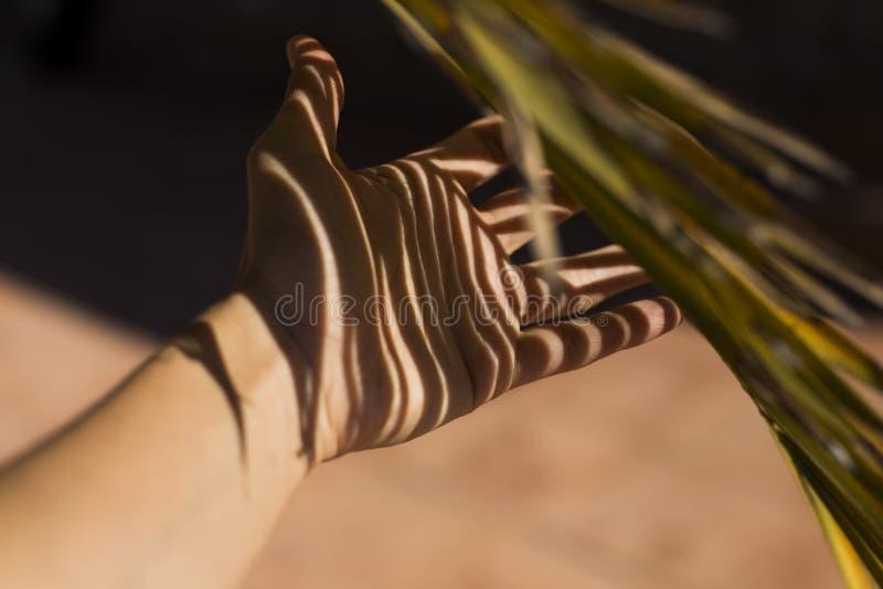 Ombre de palmier au-dessus d'une main d'une femme Concept abstrait images libres de droits