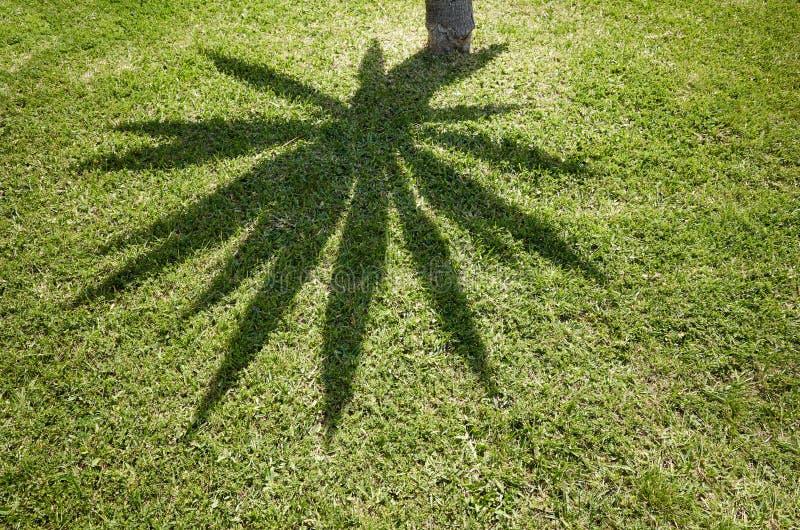 Ombre de palmier sur l'herbe photos libres de droits