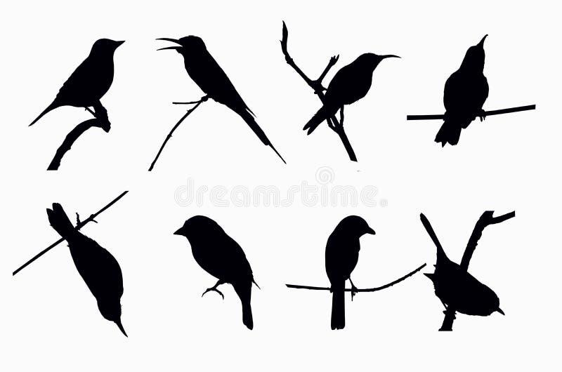 Ombre de petits oiseaux illustration stock