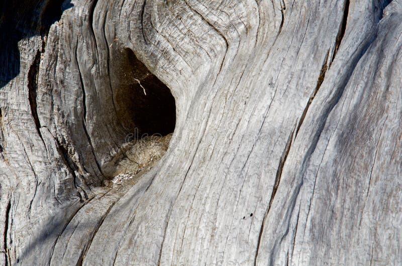 Ombre de trou de noeud dans le rondin de bois de flottage de gris argenté montrant le modèle en bois de grain photos libres de droits