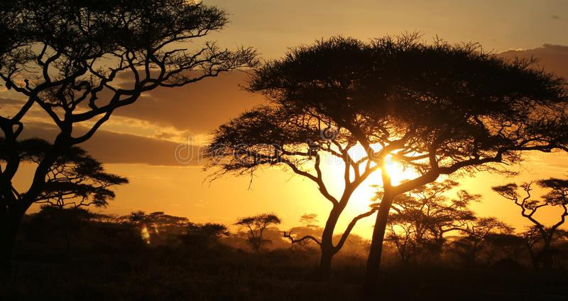 Ombre degli alberi davanti al tramonto sulla savana africana immagini stock