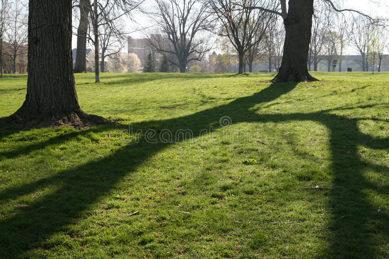Ombre dell'albero di mattina fotografie stock libere da diritti