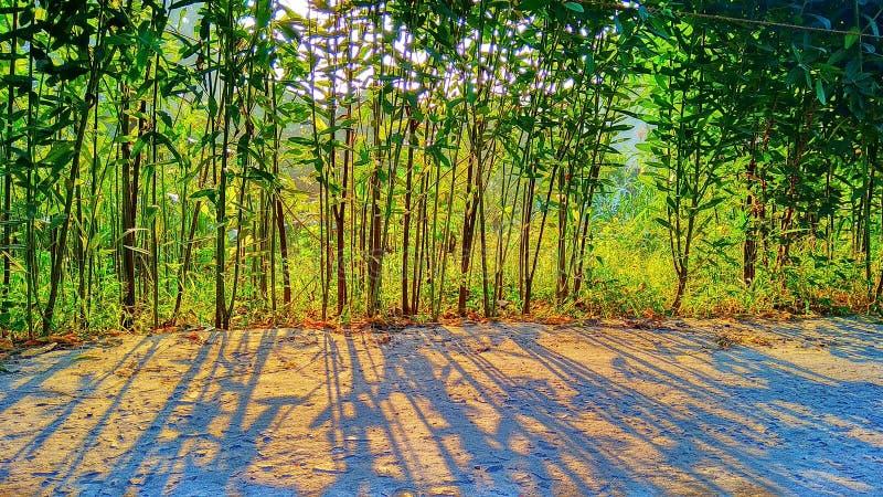 Ombre des arbres photographie stock libre de droits