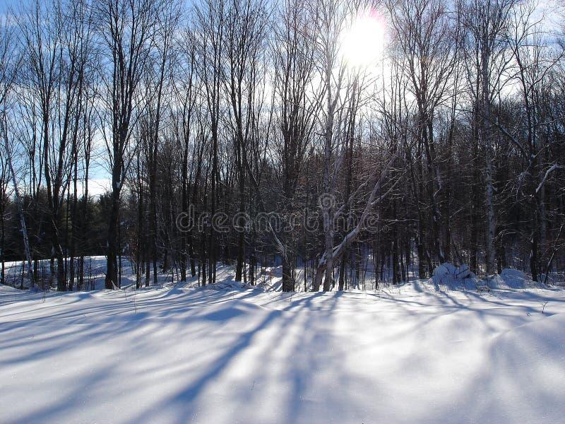 Ombre di inverno fotografie stock