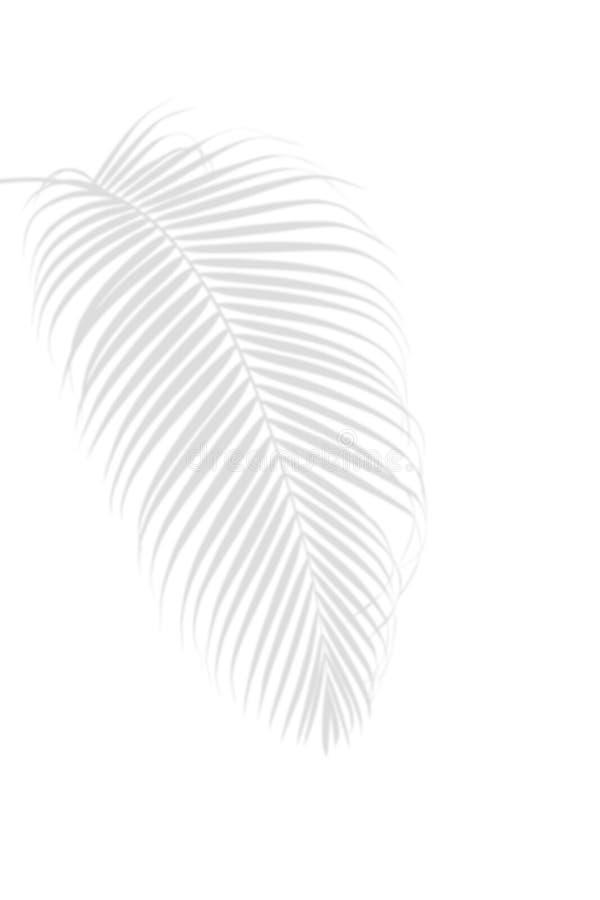 Ombre en feuille de palmier sur le backg tropical d'été de nature blanche et abstraite photo libre de droits
