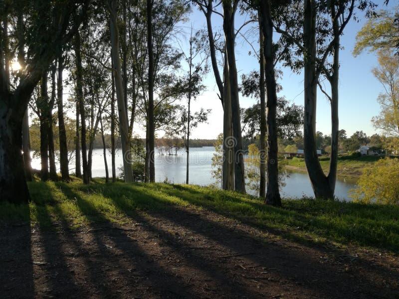 Ombre et rayons de soleil de l'arbre par le mértola de mina de são Domingos de lac photos stock