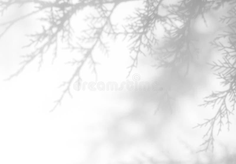 ombre grise les des aiguilles du thuja sur un mur blanc images libres de droits