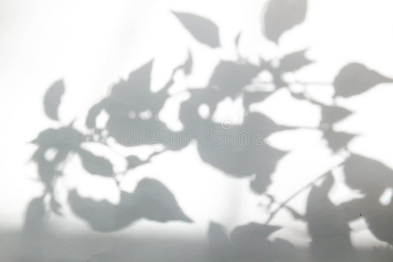 Ombre intéressante abstraite des feuilles sur un fond blanc de mur images stock