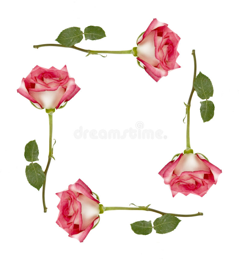 Download Ombre Roses Frame stock photo. Image of ombre, stationery - 3815010