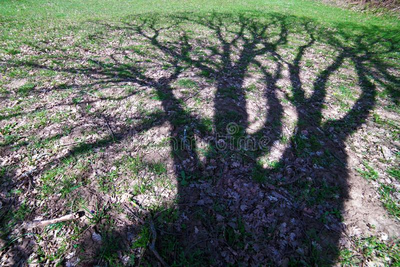 ombre sur l'herbe d'un vieux chêne images stock