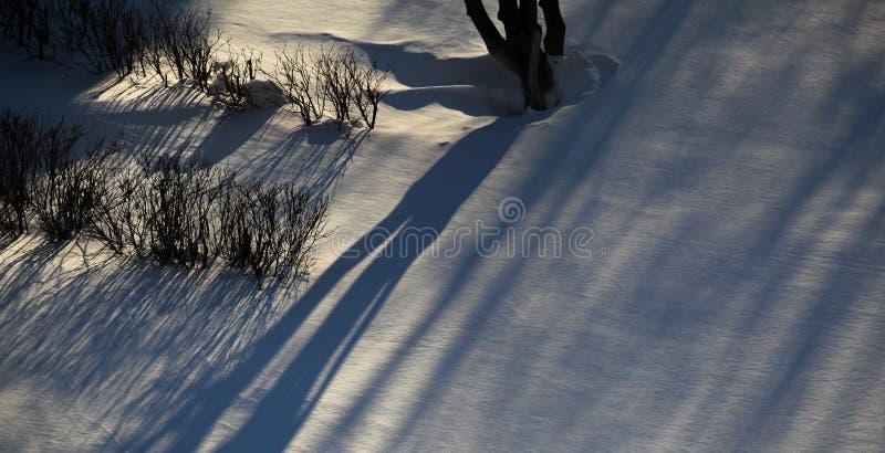 Ombre sur la neige image stock