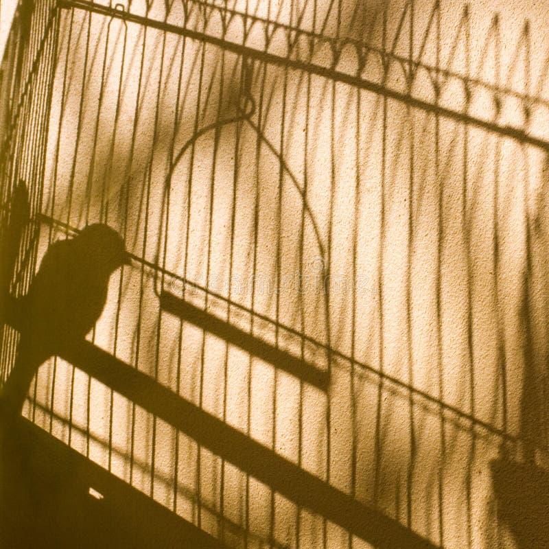 ombre Uccello color giallo canarino nella gabbia fotografia stock libera da diritti