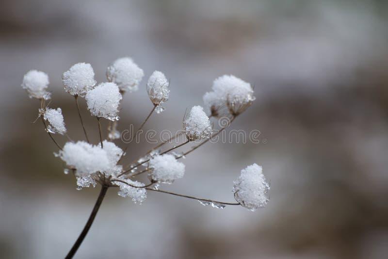 Ombrella della neve fotografie stock