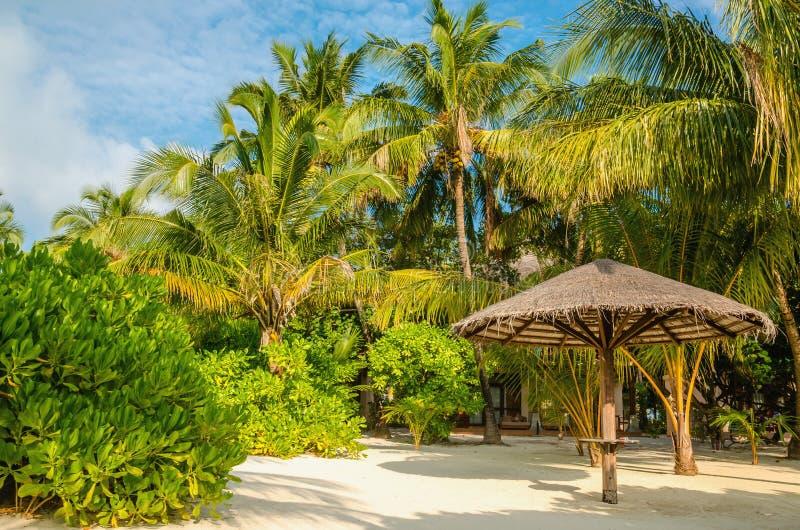 Ombrelli della palma su un fondo delle palme esotiche, Maldive fotografia stock libera da diritti