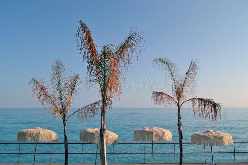 Ombrelli di spiaggia fotografie stock libere da diritti