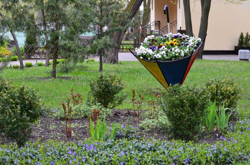 Ombrello del fiore fotografie stock libere da diritti