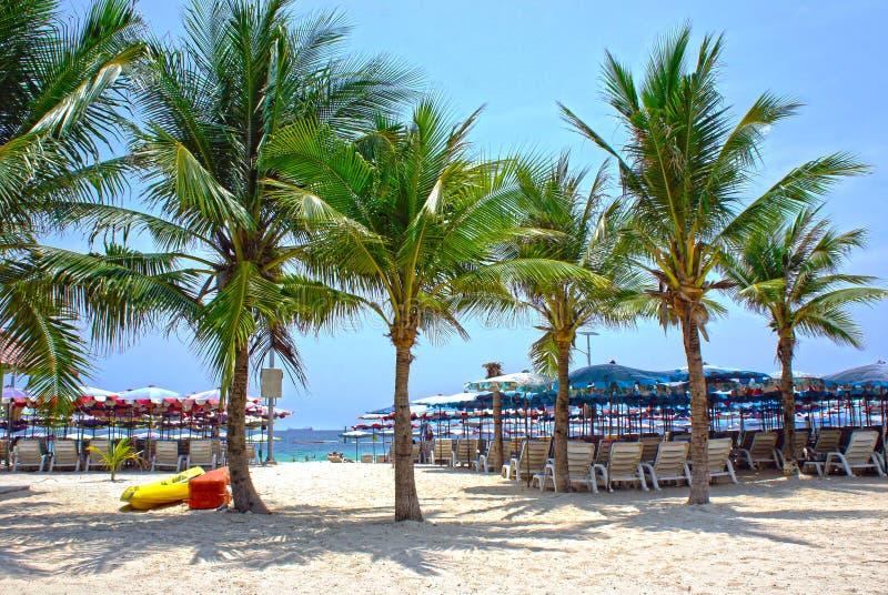 Ombrelloni e sedie di spiaggia sulla linea costiera tropicale, Tailandia fotografia stock libera da diritti