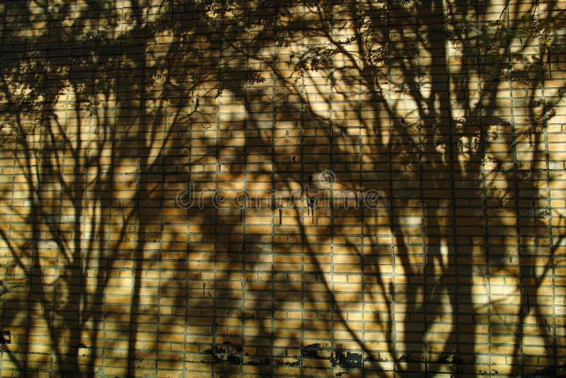 Download Ombres d'arbre sur le mur photo stock. Image du architecture - 45369616