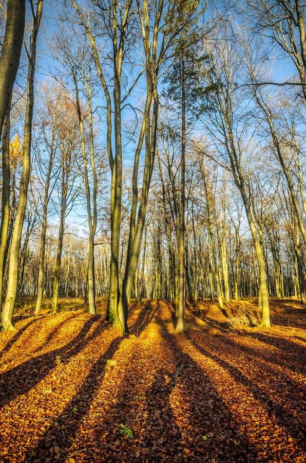 Ombres dans la forêt colorée d'automne photos stock