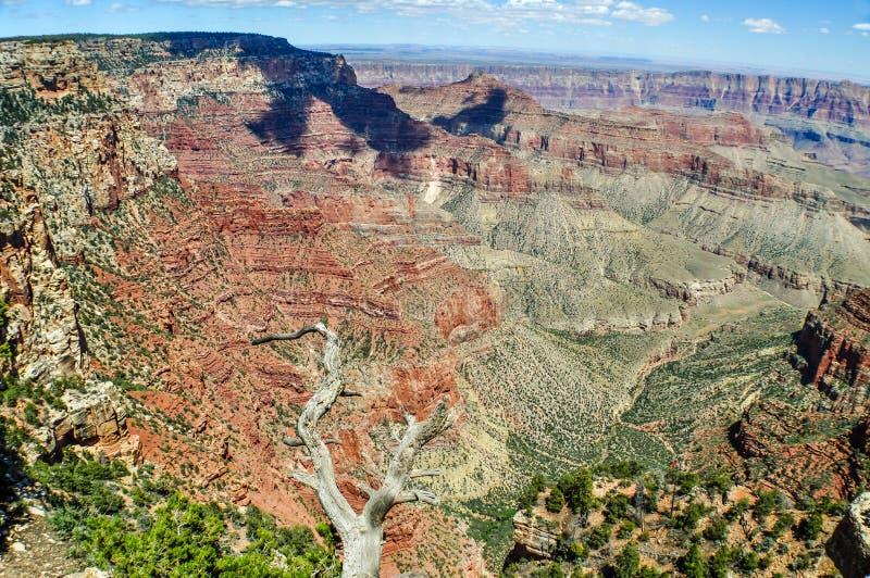 Ombres de nuage et squelettes de pin de Ponderosa le long de la jante du nord de Grand Canyon en Arizona image stock