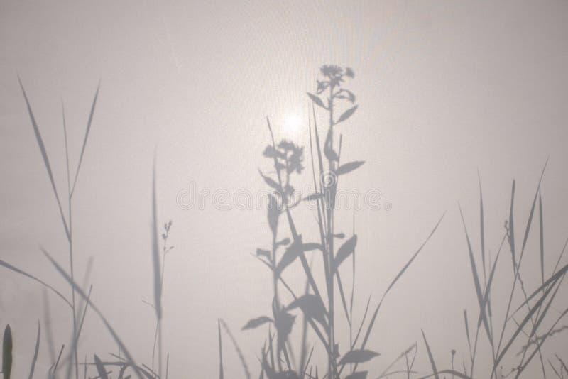 Ombres des fleurs et de l'herbe sur une texture de tissu image libre de droits