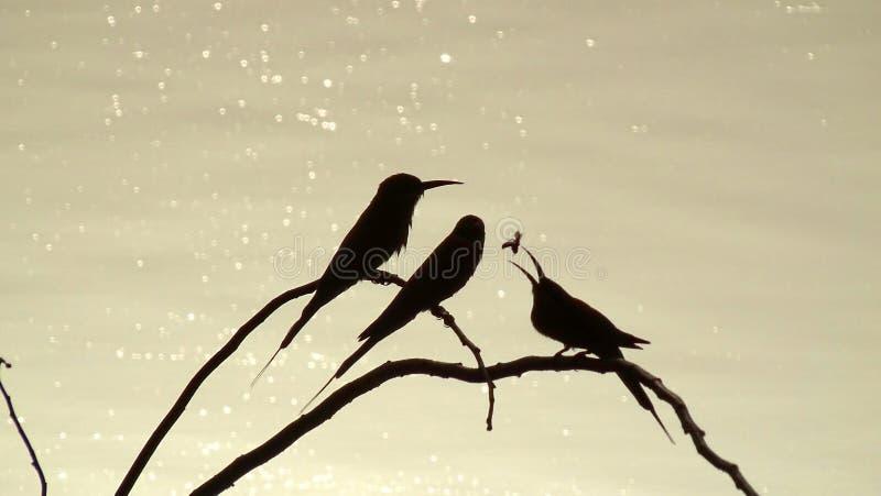 Ombres des oiseaux photographie stock