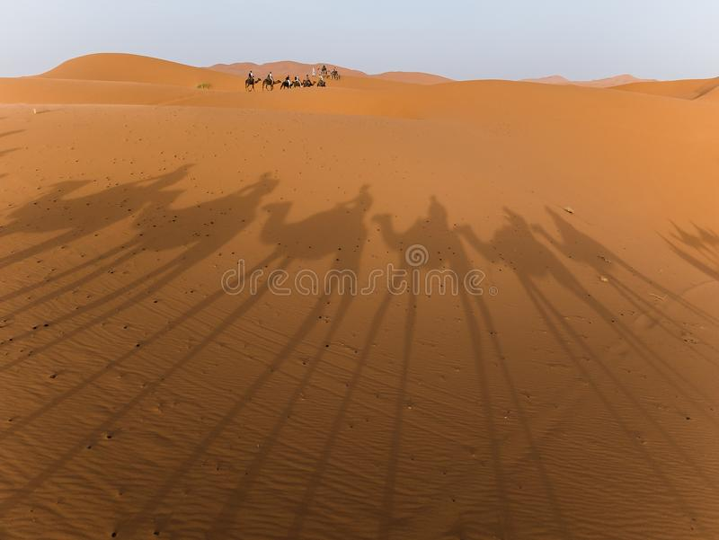 ombres du Sahara de chameaux photos libres de droits