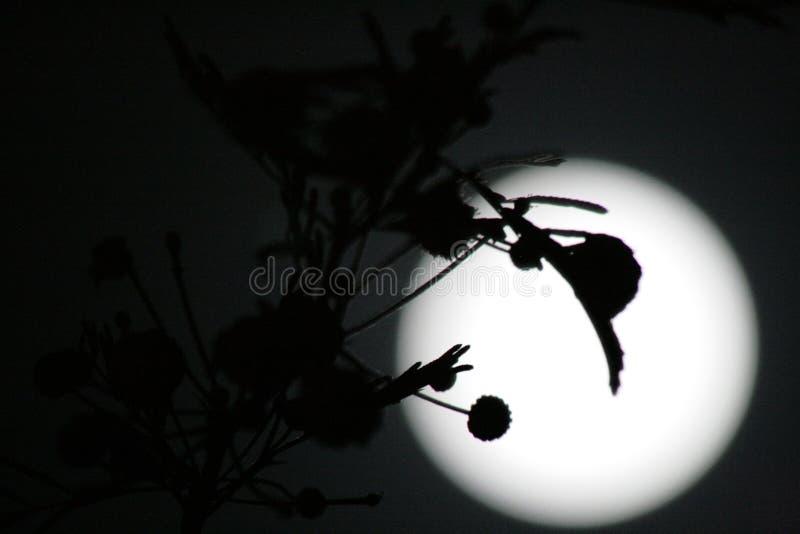 Ombres sur la lune photographie stock libre de droits