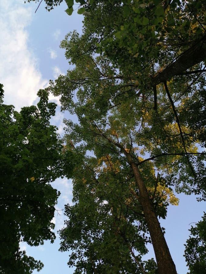 Ombres vertes en bois et aube de lumière de moment photographie stock libre de droits